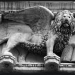 Lion_doge_@loeildoliv