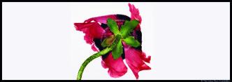 Couv_Irving Penn-Single Oriental Poppy_© The Irving Penn Foundation_@loeildoliv