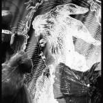 Si Peau d'âne m'était conté..., chorégraphie de Marie-Geneviève Massé, costumes Olivier Bériot © OFGDA
