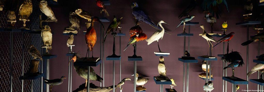 EXPOSITION DE MACHA MAKEIEFF. Trouble fête, collections curieuses et choses inquiètes © Christophe Raynaud de Lage